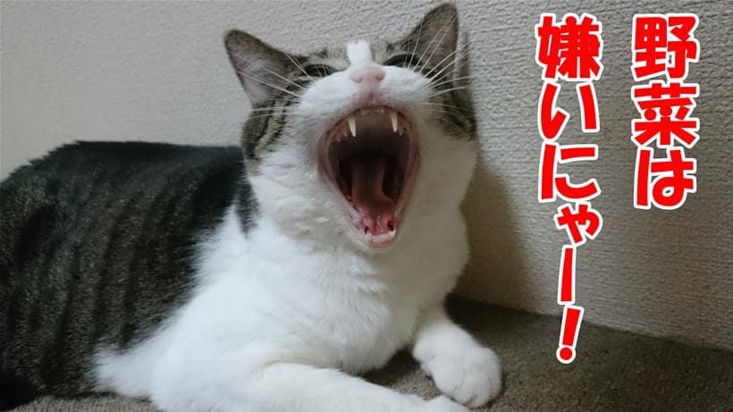 野菜は嫌いだと叫んでいる体の愛猫ミミ