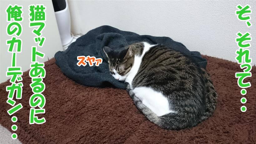 猫マットの上にさらに飼い主のカーデガンを置いて眠る愛猫ミミ