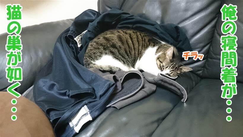 飼い主の寝間着の上で寝る愛猫ミミ