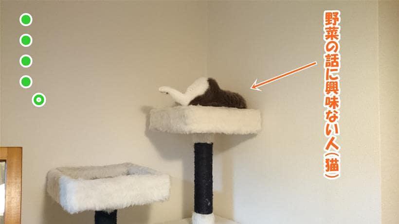 野菜の話には興味のない体で寝ている愛猫モコ