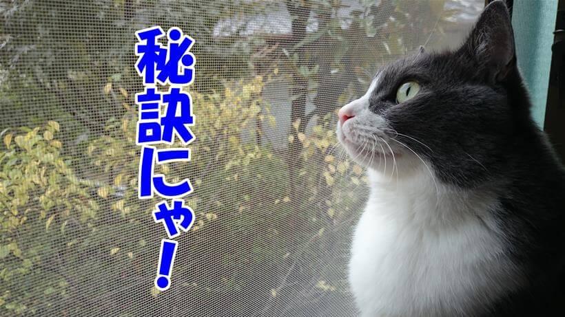 猫を長生きさせるコツを教える体の愛猫ミミ