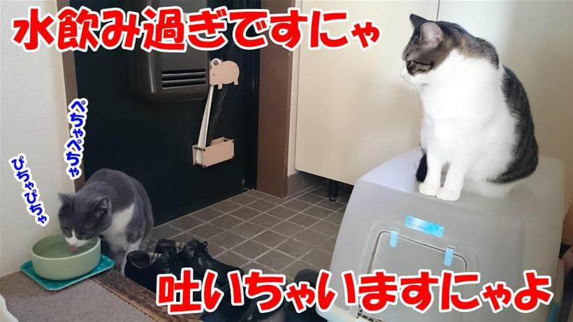 水を飲み過ぎている愛猫モコに注意する愛猫ミミ