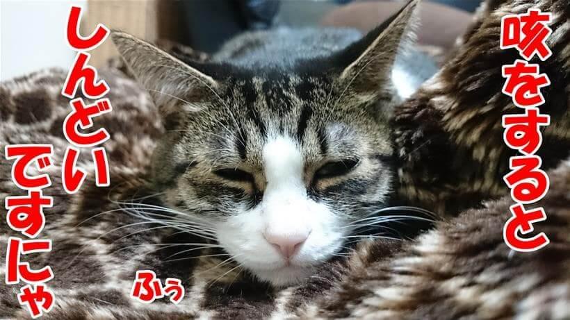 咳をするとしんどいと言って辛そうな顔をしている体の愛猫ミミ