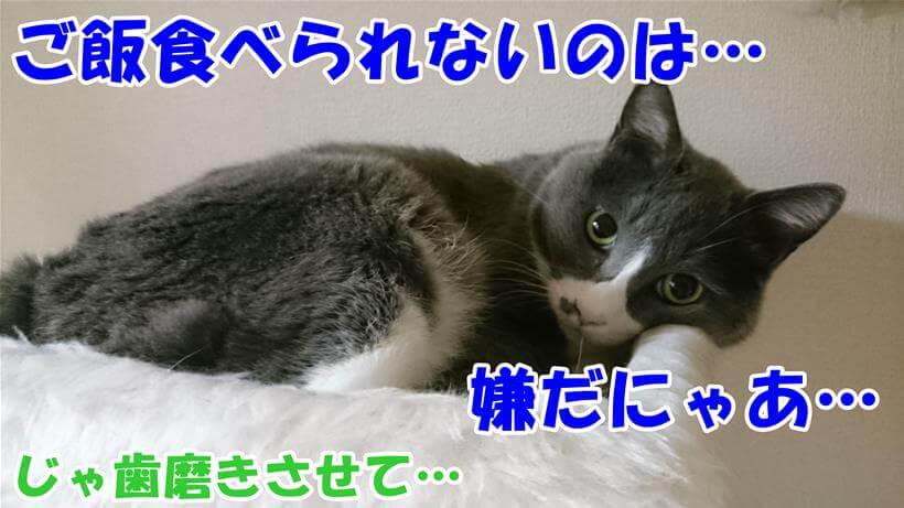 口内炎になってご飯が食べられなくなるのを嫌がり凹む体の愛猫モコ