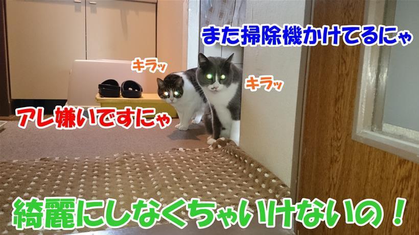 掃除機から避難している愛猫たち