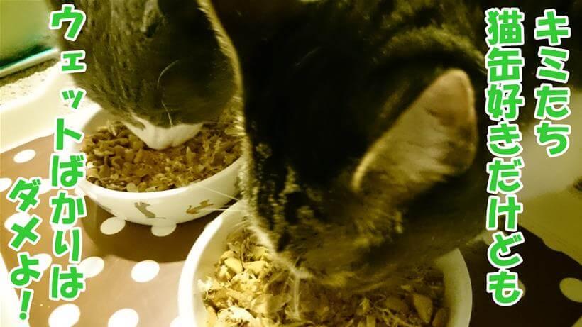 ドライフードを食べる愛猫たち