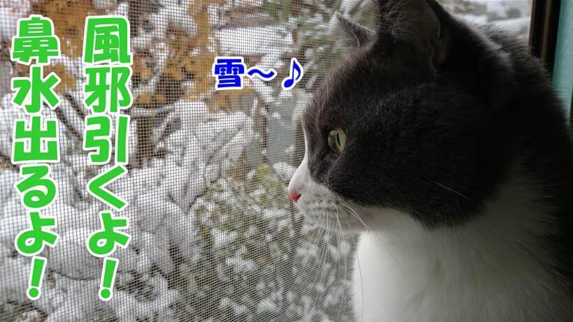 風邪をひくかもしれないのに雪を眺める愛猫モコ