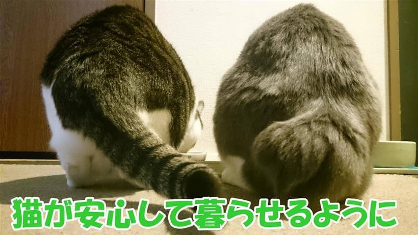 安心して食事する愛猫たち