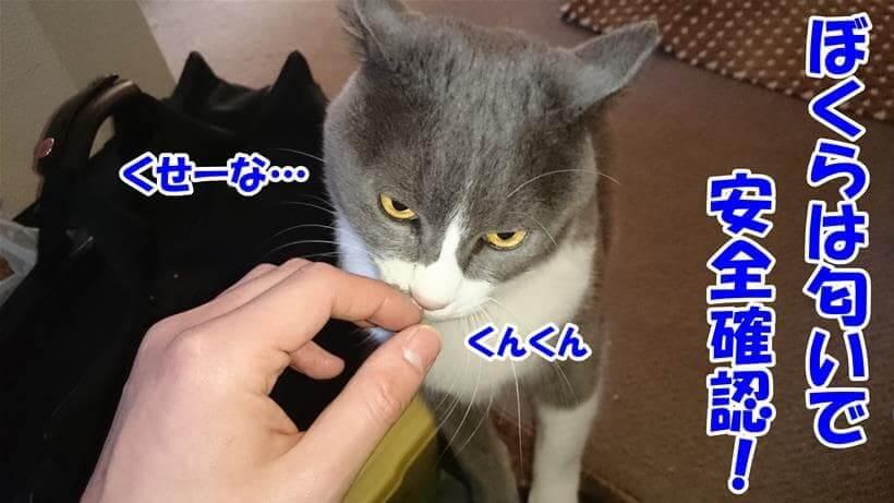 匂いを嗅いで確認している愛猫モコ