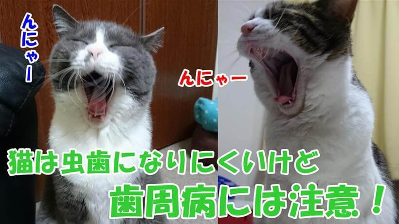 あくびして大口を開けている愛猫たち