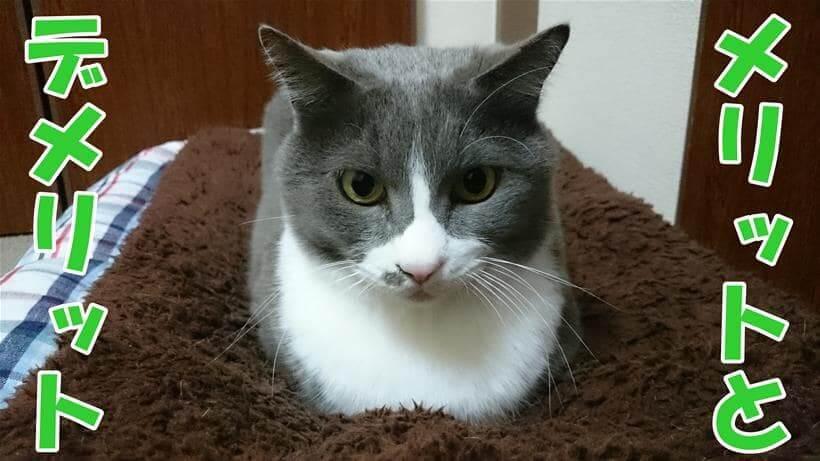メリットとデメリットと表する体で香箱座りする愛猫モコ
