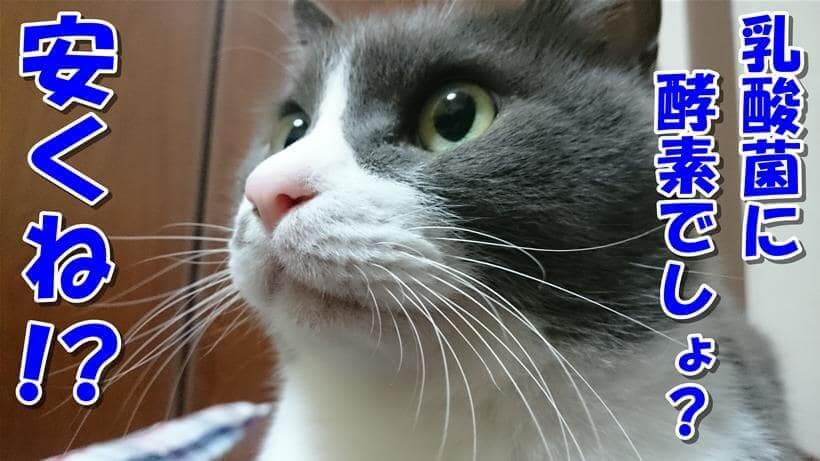 腸活サプリ「毎日爽快」は安いと言っている体で驚きの表情をしている愛猫モコ