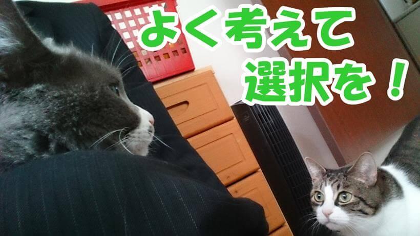 飼い主の所に集合する愛猫たち