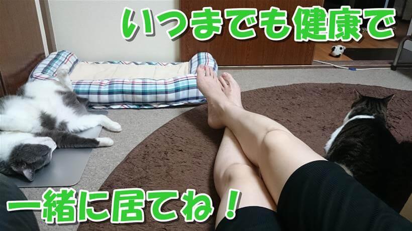 飼い主(の足)と愛猫たち