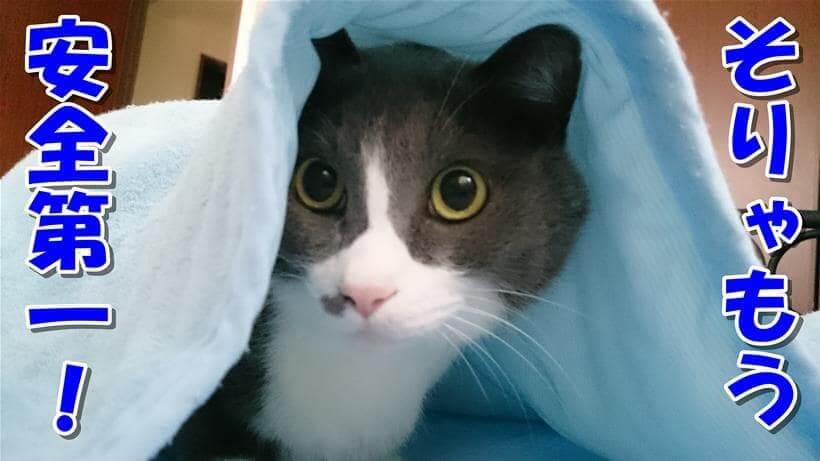 安全第一を優先している体でタオルケットに潜る愛猫モコ