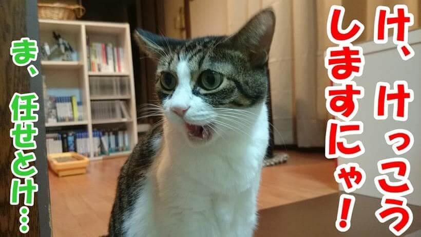 避妊手術の費用に怖じ気づく体の愛猫ミミ