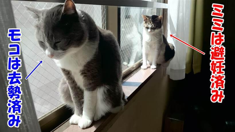 避妊、去勢をそれぞれ済ませている愛猫たち