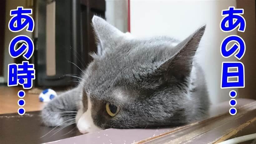 去勢するタイミングを考えている体の愛猫モコ