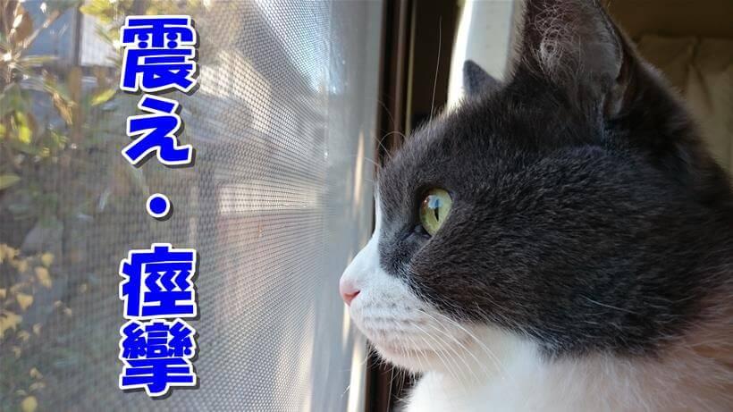 [猫の震え・痙攣]外を眺める愛猫モコの横顔