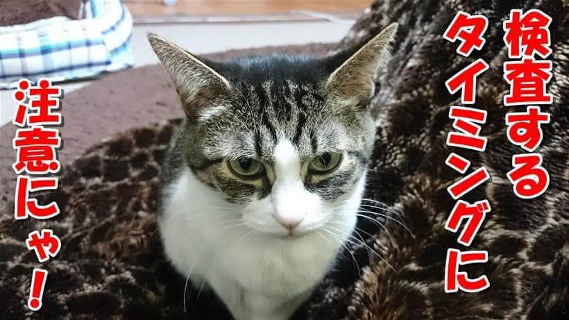 注意を促している体の愛猫ミミ