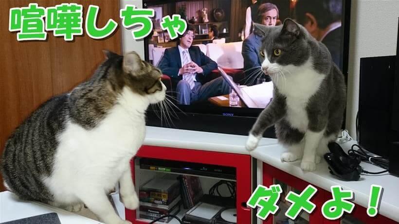 喧嘩している愛猫たち
