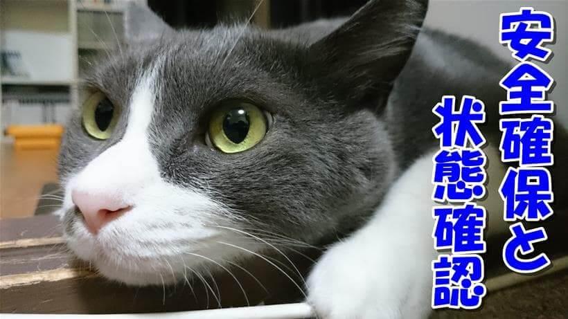 痙攣を起こした時は安全確保と状態確認と説明している体の愛猫モコ