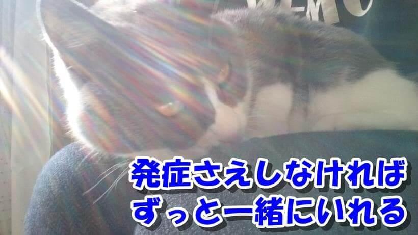 飼い主の膝の上で横になる愛猫モコ