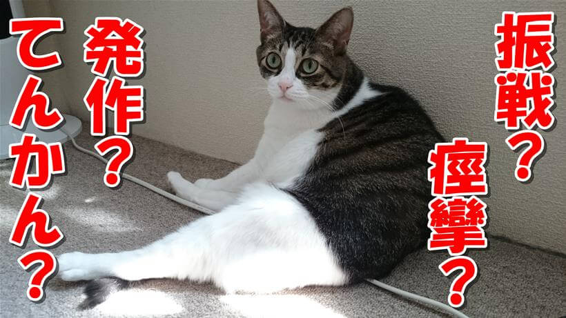 振戦?痙攣?発作?てんかん?疑問だらけの体の愛猫ミミ