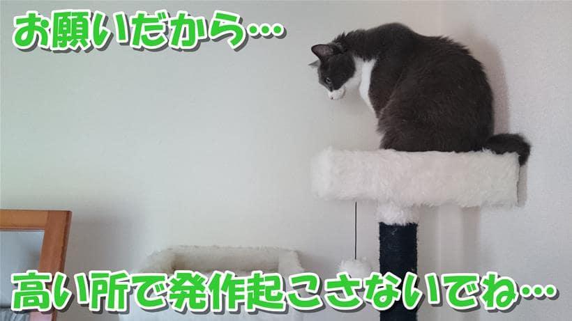キャットタワーの最上部に居るてんかん持ちの愛猫モコ