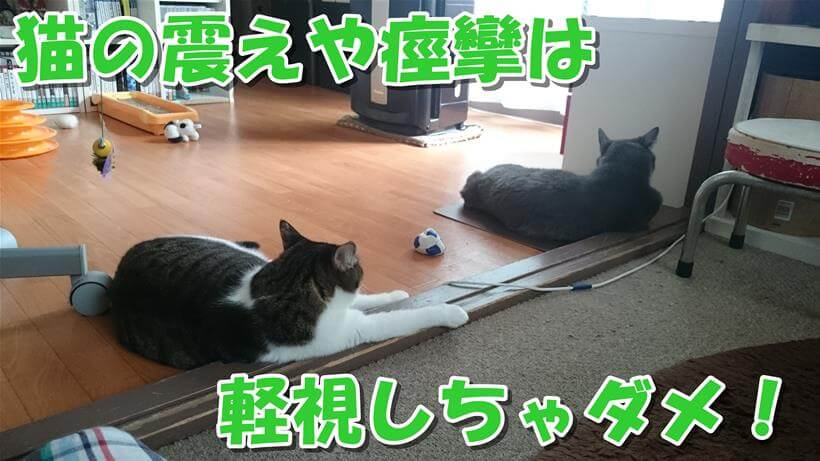 飼い主の心配をよそに膝を置いて寛ぐ愛猫たち