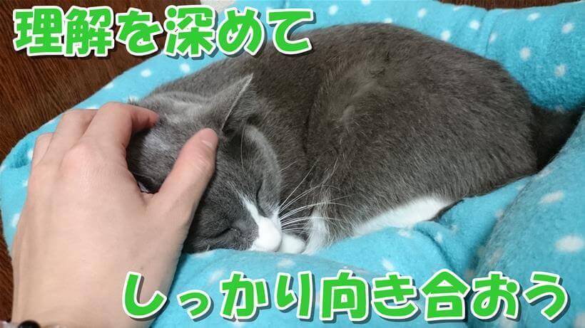 猫ベッドで寝ている愛猫モコ