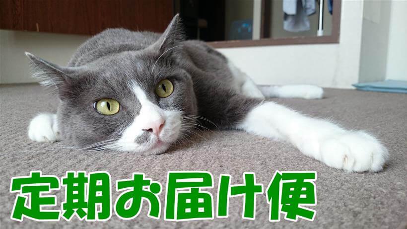 愛猫モコが顔を床に着けて横になっている「ピュリナワン 定期お届け便」タイトル画像