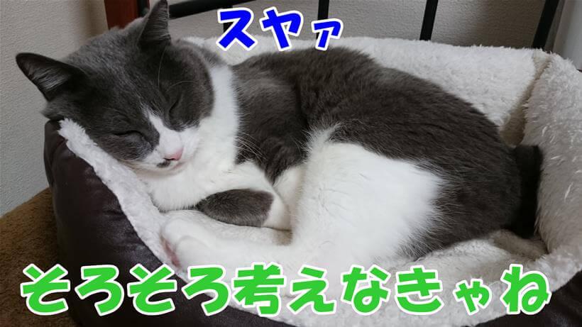 猫ベッドで眠る高齢期11歳の愛猫モコ