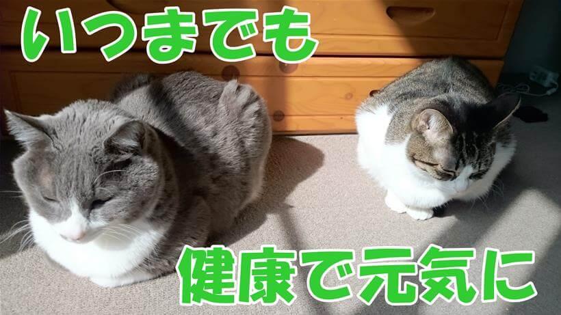 日向ぼっこする高齢期を迎えた愛猫たち