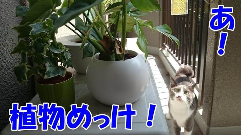 ベランダにて観葉植物を発見する愛猫モコ
