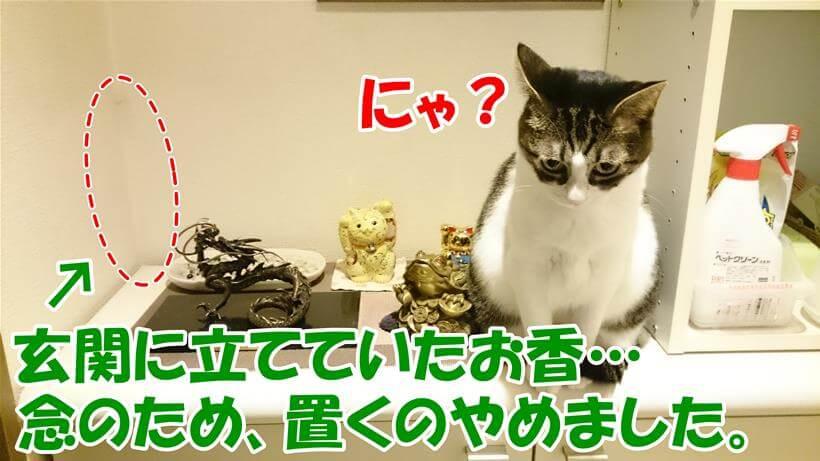 玄関に置いていたお香を退けて、縁起物と招き猫に扮する愛猫ミミ
