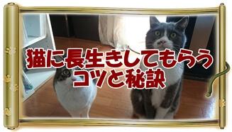 猫に長生きしてもらうコツと秘訣へ(飼い主を見つめる愛猫モコとミミ巻物Ver.)