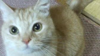 愛猫チャウ