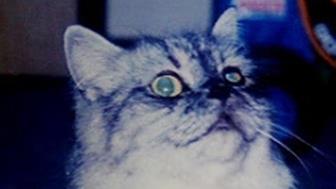愛猫ミュウ