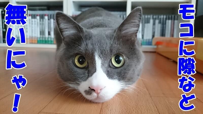 視界に隙など無いと言っている体の愛猫モコ