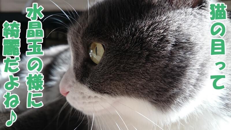 愛猫モコの水晶のような綺麗な目