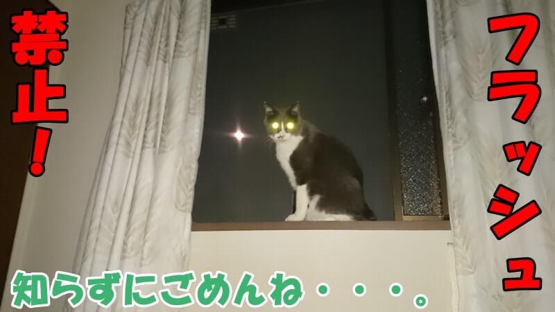 カメラのフラッシュによって目が光っている愛猫モコと月