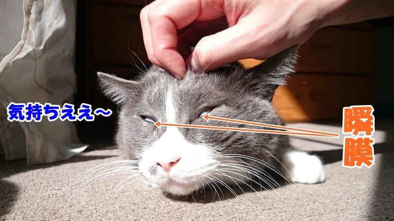 瞬膜が出ている愛猫モコ