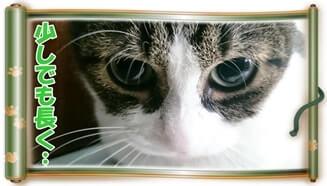 猫に長生きしてもらうコツと秘訣