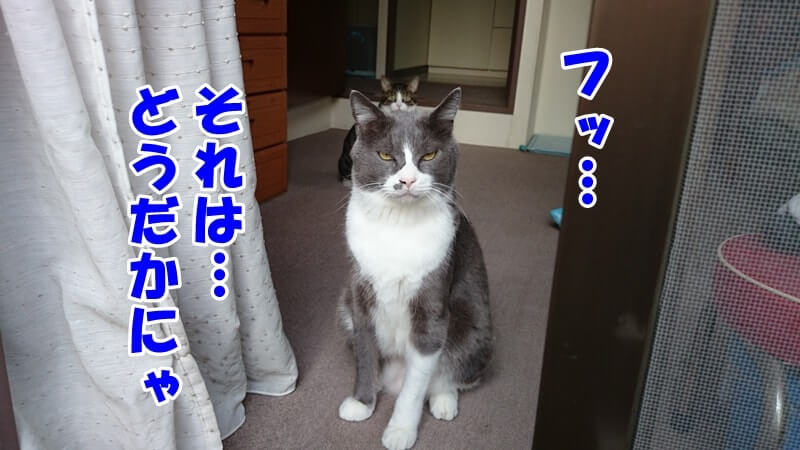 人間がなんと言おうと猫である我々にしか分からないと言いたげな体の愛猫モコ
