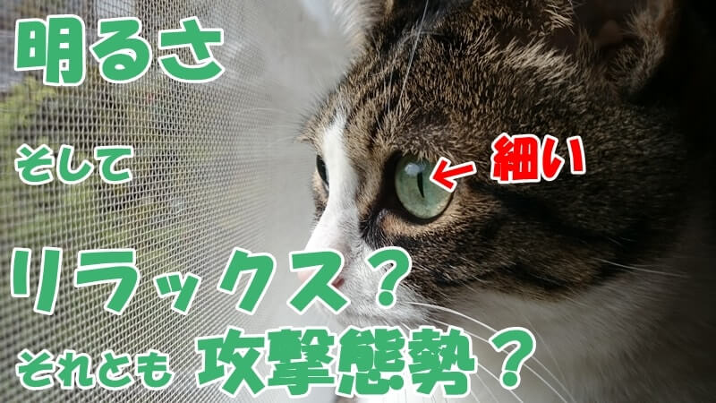 瞳孔が細くなっている愛猫ミミ