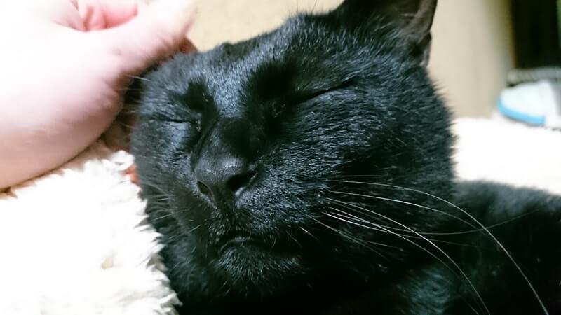 撫でられて気持ち良さそうな顔をしている実家の黒猫カイくん