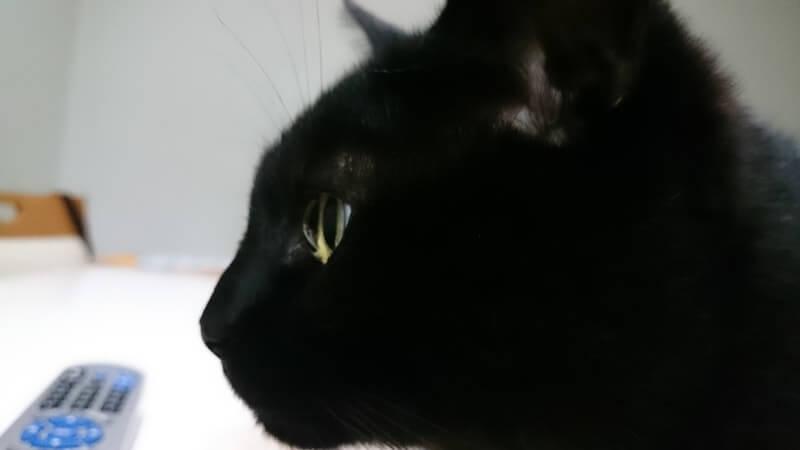 黒猫カイくんの絵になる横顔