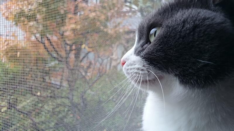 外を眺めるてんかん持ちの愛猫モコ