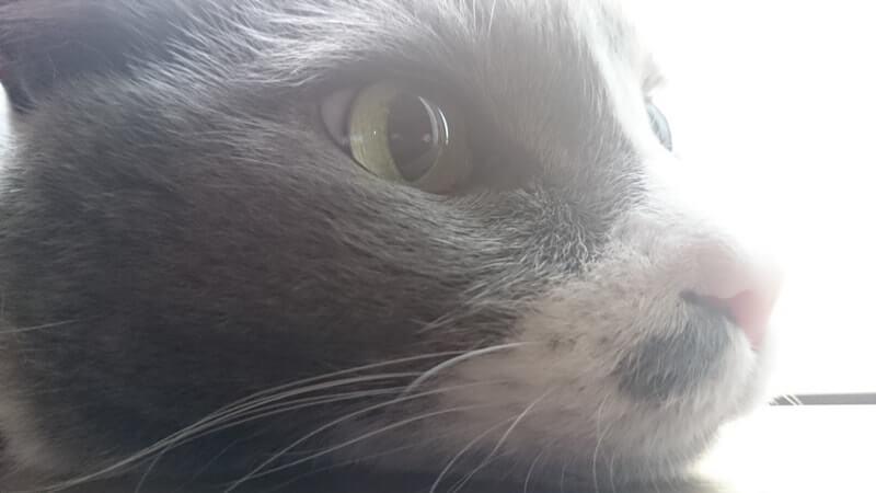 てんかん持ちの愛猫モコ